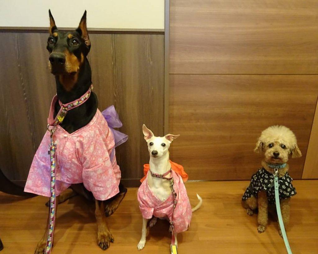 アニマルセラピー犬たち