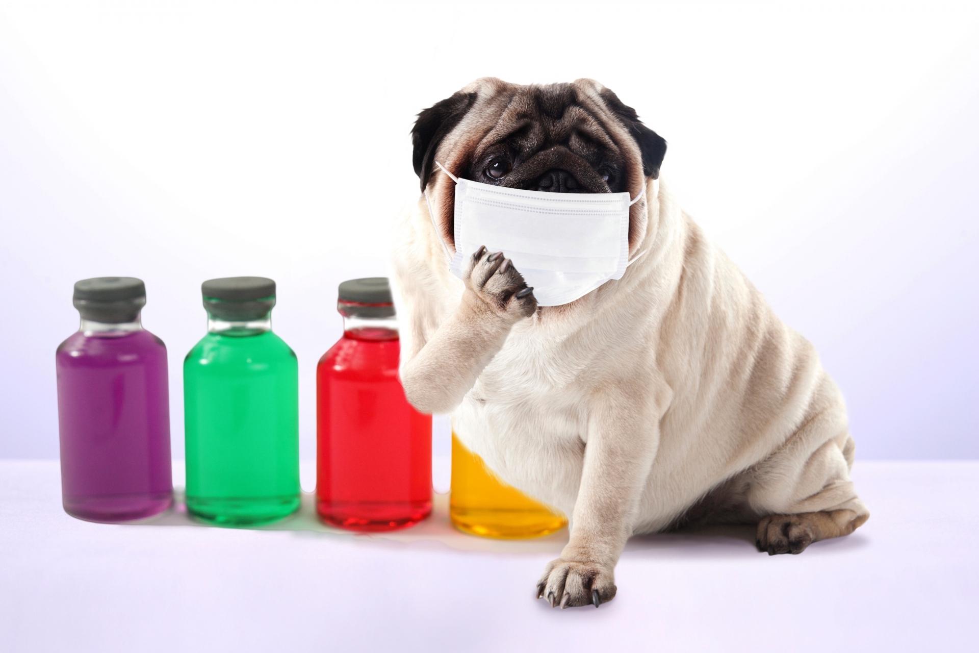 犬の花粉症